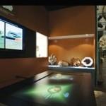 Multitouch au musée d'Histoire naturelle de Lille 2