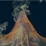 Au coeur des Séquoias : une expérience hors du commun !