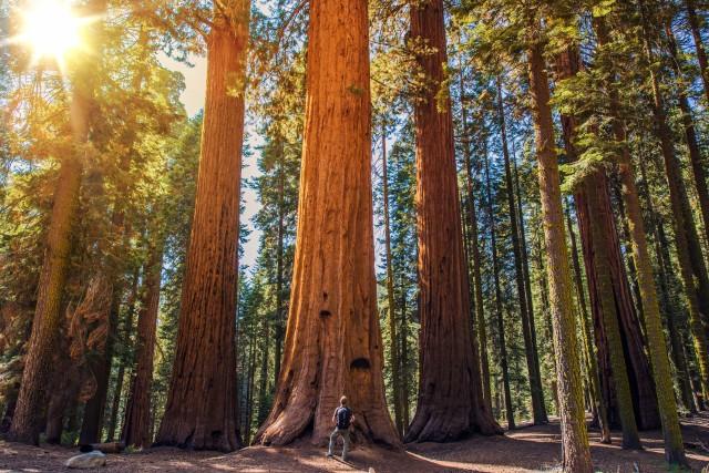 sequoia-640x427